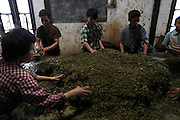 Tea factory workers sort different grades of tea, removing any unwanted bits. The tea is already pickled after having fermenting for many months. It is then sorted and stuffed in to sacks for distribution. <br /> Myanmar differs from all other tea producing nations because the majority of tea produced here is eaten rather than drunk. Fermented in large box's or holes in the ground holding several tonnes and left for anywhere between 3 to 6 months the final product is mixed with onions, chillis, garlic for example producing a Burmese style salad or added to other dishes for flavour creating an industry that is worth millions of dollars every year. Termed 'laphet' in Burmese, this pickled tea is not only unique to the country but is also one of the most important national delicacy's.<br /> The epicentre of Myanmar's tea is a small ridge-topped town called Namshan in Shan State and is inhabited by the Palaung ethnic minority. Believed to be the place where tea seeds were first given to the local people by a Burmese king who had brought them from abroad around 800 years ago. The best pickled tea in the country is made here and almost everyone in the town is invoilved in the industry that every year sends thousands of tonnes of pickled tea to Mandalay and Yangon.