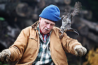 Jim Powell lets a grouse, which he befriended in the forest near Cataldo three years ago, playful tug on his knitted cap during a a visit Wednesday, Oct. 19, 2011 on his property near Cataldo, Idaho. For the first two years while Powell would harvest lumber on his property, the grouse would watch from a distance. This summer, the grouse came in closer, standing on logs while Powell used his chainsaw or sitting on the ATV the retired engineer used on his property.