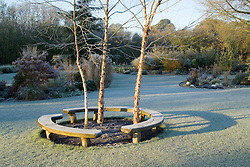 Early sunlight casting shadows on a frosty lawn. Curved bench seats around three birch trees - Betula nigra 'Heritage'. Design: John Massey, Ashwood Nurseries