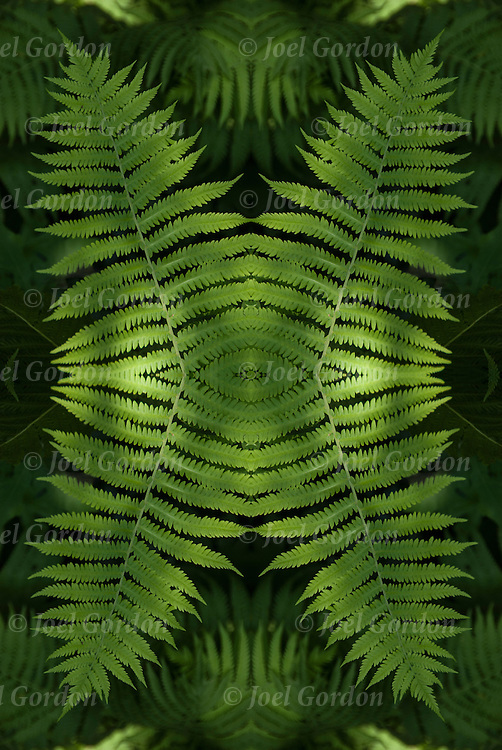 Photographic series of digital computer art of Fern foliage. <br /> <br /> Two or more layers or generations were used to enhance, alter, manipulate the image, creating an abstract