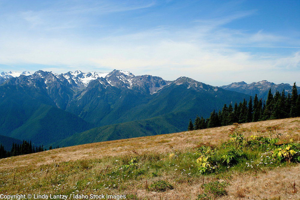 Washington, Port Angelas. The Olympic Mountains as viewed from Hurricane Ridge in the Olympic National Park.
