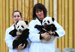 Giant panda twin cubs Jia Panpan (R) and Jia Yueyue pose for photos at the Toronto Zoo in Toronto, Canada, on March 7, 2016. The Toronto Zoo officially revealed the names of the first Canadian-born twin giant panda cubs on Monday: Jia Panpan (meaning Canadian Hope) for the male cub and Jia Yueyue(meaning Canadian Joy) for the female cub. Their mother, Er Shun, is on loan from China along with a male giant panda named Da Mao in 2013. EXPA Pictures © 2016, PhotoCredit: EXPA/ Photoshot/ Zou Zheng<br /> <br /> *****ATTENTION - for AUT, SLO, CRO, SRB, BIH, MAZ, SUI only*****