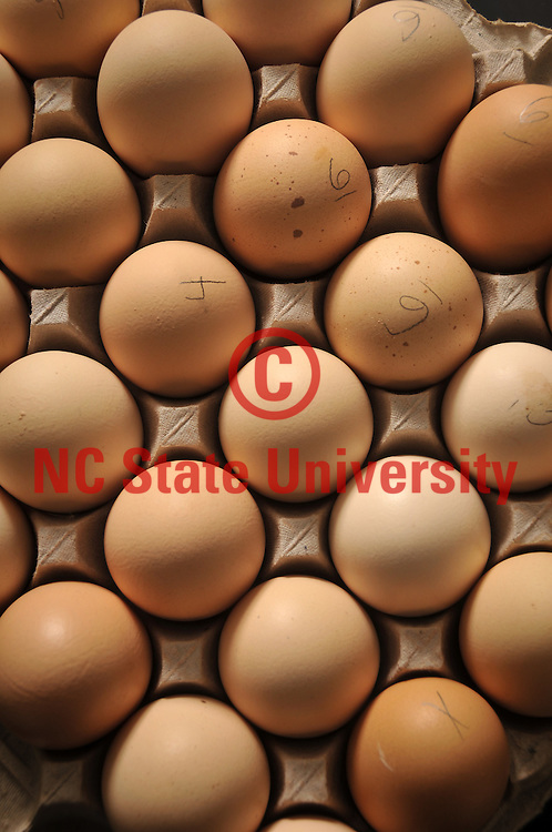 Prestage Dept. of Poultry Science eggs in a Scott Hall teaching lab.