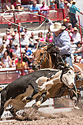 A professional rodeo cowboy ropes a steer during the team roping event at the Cheyenne Frontier Days rodeo at Frontier Park Arena July 23, 2015 in Cheyenne, Wyoming. Frontier Days celebrates the cowboy traditions of the west with a rodeo, parade and fair.