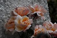 Garden and Wild Flowers