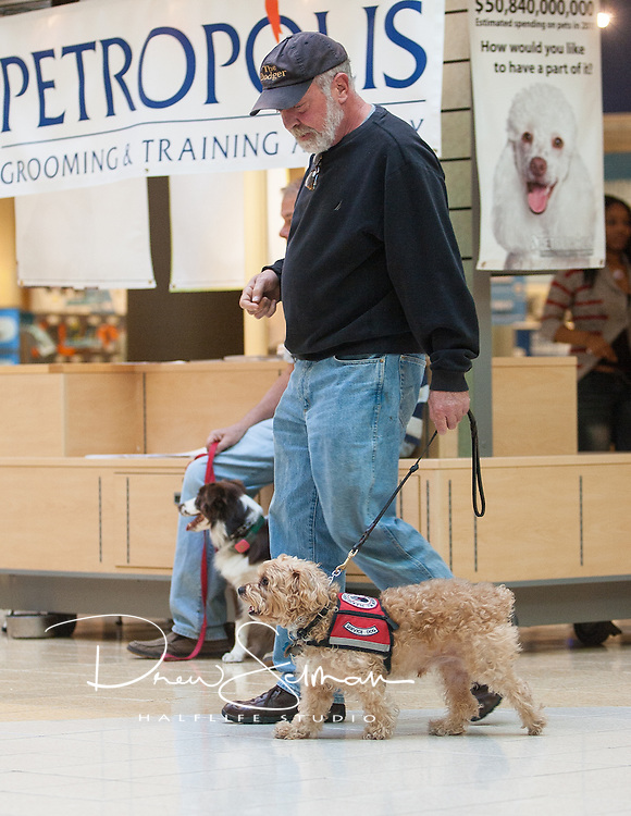 Baxter and his owner Roger Redel of Ballwin, show off their skills in a public dog training display at the Chesterfield Mall.  Baxter is a trained therapy dog for Roger's wife Trisha.