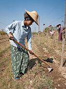 AyeTha Ya vineyard near Inle Lake, Burma