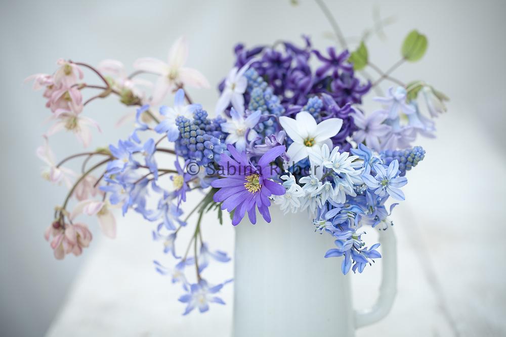 Spring arrangement with Anemones, Scilla siberica, Chionodoxa, Grape Hyacinths, Ipheion, Puschkinia libanotica and Clematis armandii 'Appleblossom'
