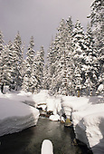 California: Sequoia, Winter