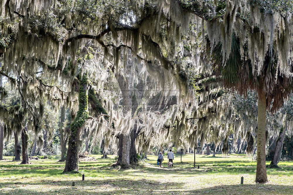 A couple walks a dog along the ancient Live Oak trees covered in Spanish moss at the Fort Frederica National Monument, the original colonial settlement in St. Simons Island, Georgia. Fort Frederica was established by Georgia founder James Oglethorpe in 1736 to serve as a bulwark against the Spanish settlements in Florida,