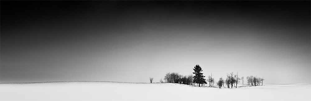 Group of trees in snow covered pasture