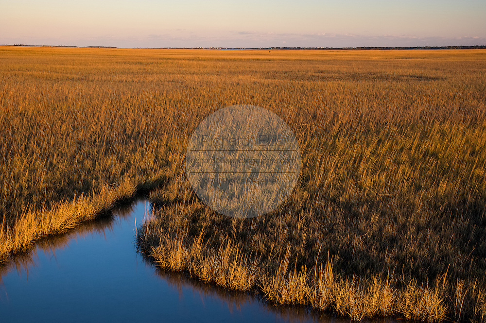 Saltwater marsh along the coast of South Carolina near Charleston.