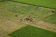 Nederland, Utrecht, Gemeente Maartensdijk (de Bilt), 23-06-2010; Kerkpolder, tussen Hilversum en Westbroek. Koeien en kalfjs  in het voorjaar in het weiland..Cows in the spring in the meadow..luchtfoto (toeslag), aerial photo (additional fee required).foto/photo Siebe Swart