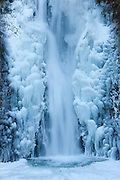 The lower tier of Multnomah Falls, surrounded by ice, plunges 69 feet (21 m), into a frozen splash pool. This waterfall, and most others along Oregon's Columbia River Gorge, were frozen after a week of below-freezing temperatures.