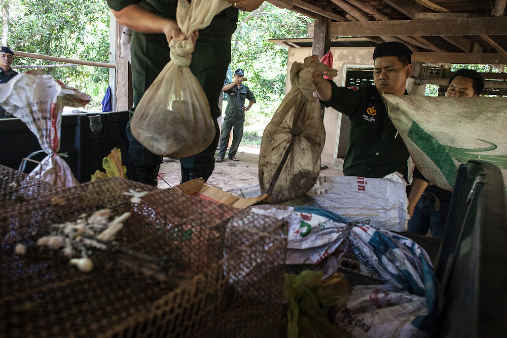 Cambodia, 2014. Rangers load rescued animals on pickup.