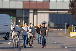 Team Suisse<br /> Departure horses from Liege Airport<br /> FEI World Equestrian Games™ Tryon 2018<br /> © Hippo Foto - Dirk Caremans<br /> 01/09/2018