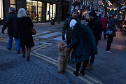 A passer-by fusses over a pet Cockapoo dog in Seven Dials near Covent Garden, on 12th December 2017, in London England.