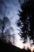 Blurred movement and winter afternoon trees in north Somerset forest land.