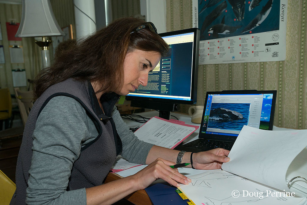 New England Aquarium researcher Monica Zani matches sightings of North Atlantic right whales to catalogued whales using DIGITS database software at the Whale Research Station in Lubec, Maine, U.S.A.