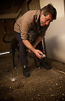 Kent, England, April 2007. Birch grove Kennel. Paul Gartland, owner of Birtch grove Kennel, is checking one of his dogs for training and after noon race.