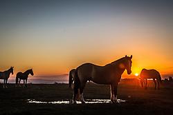 Cavalos ao por-do-sol no bairro Vila Nova, zona rural de Porto Alegre. FOTO: Jefferson Bernardes/Preview.com