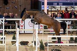 104, Enelzkey SR<br /> Hengstenkeuring BWP - Lier 2019<br /> © Hippo Foto - Dirk Caremans<br /> 18/01/2019
