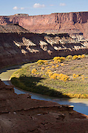 Labyrinth Canyon on the Green River during the peak Autumn colors as seen from the White Rim Trail in Canyonlands National Park, Utah.