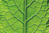 Close-Up of Leaf