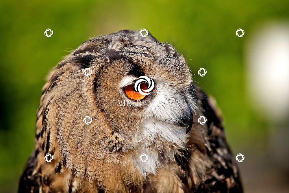 HEDEL - De verzorger van de Oehoe uil geniet van het mooie weer. En de Oehoe geniet weer volop van de heerlijke hapjes die hij krijgt. FOTO LEVIN DEN BOER - PERSFOTO.NU