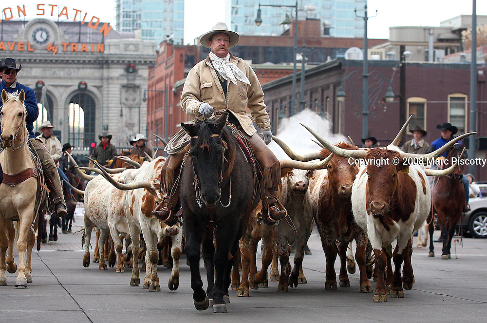 "SHOT 1/15/08 1:24:57 PM - Cowboys drive Texas Longhorn Cattle through the streets of Downtown Denver Tuesday January 15, 2007 during the National Western Stock Show Parade. The National Western Stock Show is held every January at the National Western Complex in Denver, Colorado. First held in 1906, it is the world's largest stock show by number of animals and offers the world?s only carload and pen cattle show in the historic Denver Union Stockyards. The stock show is governed by the Western Stock Show Association, a Colorado 501 (c) 3 institution, which produces the annual National Western Stock Show in an effort to forward the association's mission: ""To preserve the western lifestyle by providing a showcase for the agricultural industry through emphasis on education, genetic development, innovative technology and offering the world's largest agricultural marketing opportunities."" The Super Bowl of livestock shows, National Western hosts 20 breeds of cattle, horses, sheep, swine, goats, llamas, bison, yak, stock dogs, poultry and rabbits. The 2008 National Western runs from January 12-27 this year..(Photo by Marc Piscotty / © 2008)"
