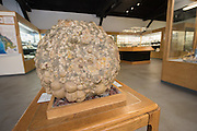 Dennis and Mary Murphy Petrified Wood Gallery