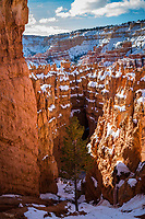 Looking down to Wall Street in Bryce Canyon National Park in Winter.