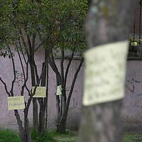 """Toluca, México (Mayo 06, 2018).- Vecinos de la colonia Independencia en Toluca, formaron un cinturón de resguardo al rededor del parque conocido como """"El Parque de los Gigantes"""", inconformes por el proyecto de construcción de una estancia infantil, lo que significaría derribar 40 árboles de esta zona recreativa.  Agencia MVT / Crisanta Espinosa."""