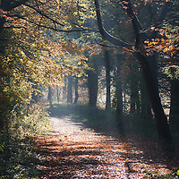 Rays of sunlight though mist on an autumnal woodland path
