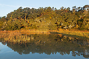 Salt Marsh and Maritime Forest Reflection
