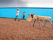 "30 JULY 2005 - WILLIAMS, ARIZONA, USA: Children practice their ""dummy"" roping skills at the Arizona Cowpunchers' Reunion Rodeo, the largest amateur rodeo in Arizona, in Williams, AZ, July 30. Children in dummy roping try to lasso a steer roping dummy. Professional rodeo cowboys cannot participate in the rodeo. Only working ranch cowboys and their families can participate in the rodeo, which features sports more geared to ranch life, like ""wild cow milking"" than pro rodeos, which feature bull riding. Williams, a small ranching town in northern Arizona and about an hour from the south entrance to the Grand Canyon National Park, has reinvented itself as a tourist destination. The town draws tourists going to the park and tourists who want to experience American western lifestyle. The town hosts the largest amateur rodeo in Arizona, drawing contestants and spectators from across the state. PHOTO BY JACK KURTZ"