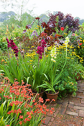 Hot borders in the brick garden at Glebe Cottage. Gladiolus in pots including Gladiolus 'Green Star' and 'Plum Tart'. Ricinus communis, Dahlia 'Bishop of Llandaff', Crocosmia and Rudbeckia fulgida var. deamii AGM