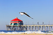 Sea Gull Flying at the Huntington Beach Pier