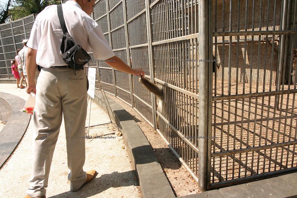 Georgien/Abchasien, Suchumi, 2006-08-25, Ein Mann füttert einen Affen. Das Affeninstitut in Suchumi war in der Sowjetzeit ein grosses Forschungsinstitut. Hier wurde u.a. am Rhesusaffen geforscht. Im Krieg wurde das Institut stark beschädigt und viele Tiere befreiten sich. Heute sind die verbliebenen Affen eine Touristenattraktion. Abchasien erklärte sich 1992 unabhängig von Georgien. Nach einem einjährigen blutigen Krieg zwischen den Abchasen und Georgiern besteht seit 1994 ein brüchiger Waffenstillstand, der von einer UNO-Beobachtermission unter personeller Beteiligung Deutschlands überwacht wird. Trotzdem gibt es, vor allem im Kodorital immer wieder bewaffnete Auseinandersetzungen zwischen den Armee der Länder sowie irregulären Kämpfern. (A Man feeds a monkey. The Monkey institut of Suchumi was a famous institution of science. The Rhesus monkey was one of the main tasks. DUring the war the institut became badly damaged and many apes fleed. Today the residual monkeys become a attraction for tourists. Abkhazia declared itself independent from Georgia in 1992. After a bloody civil war a UNO mission observing the ceasefire line between Georgia and Abkhazia since 1994. Nevertheless nearly every day armed incidents take place in the Kodori gorge between the both armys and unregular fighters)