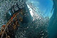 Boys and Baitfish      .Esa Ala Wharf, PNG
