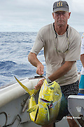skipper Steve Campbell, on Reel Addiction, strops a mahimahi, dorado, or dolphinfish, Coryphaena hippurus, to prevent it from jumping around the cockpit and injuring someone, Vava'u, Kingdom of Tonga, South Pacific