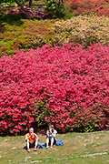 UNITED KINGDOM, London: 10 May 2017 Visitors enjoy the weather as they take a break amongst thousands of colourful Azaleas in Windsor Great Park this afternoon. Rick Findler / Story Picture Agency