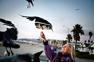 """Jane """"Purple"""" Hoover feeds a flock of seagulls on the boardwalk in Pacific Beach on December 9."""