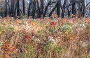 Fall Field in Bombay Hook Delaware, HDR image