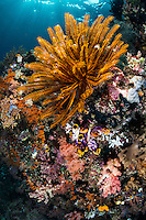 A Feather Star under the bright morning sun <br /> <br /> Shot in Indonesia