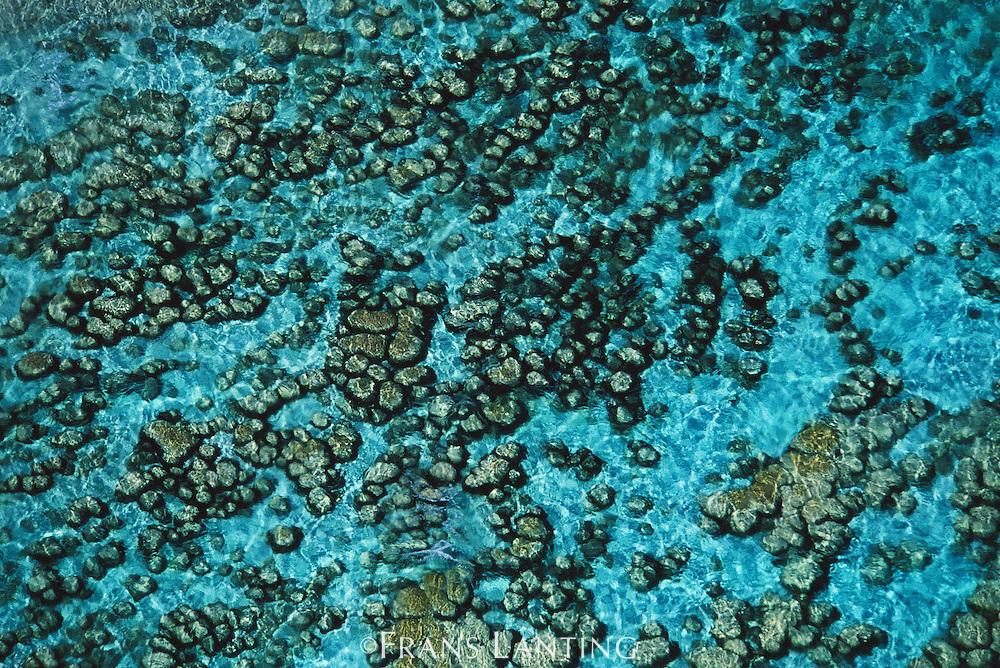 Stromatolites (aerial), Shark Bay, Australia