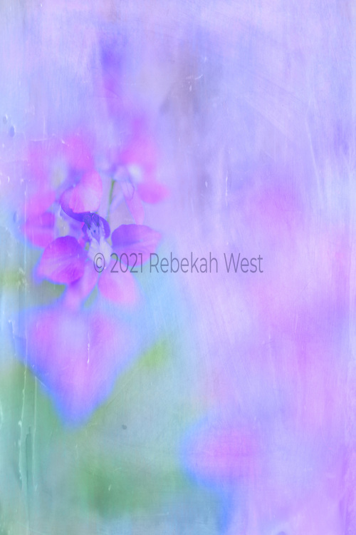 Vivid soft stem of five petaled flowers up left side of vertical field, one flower roughly  halfway up is in soft focus, background right half is soft pinks and purples, bottom left is a soft bright breen with some blues and blue greens, flower art, feminine, iridescent, navy peony underlayers, high resolution, licensing, 3461 x 5192