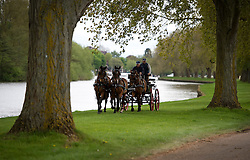 © London News Pictures. 08/05/2012. Windsor, UK.  Horses pulling a carriage being given a warmup on the banks of the River Thames before competition  on day one of the Royal Windsor Horse Show, set in the grounds of Windsor Castle. Established in 1943, this year will see the Show celebrate its 70th anniversary. Photo credit: Ben Cawthra/LNP