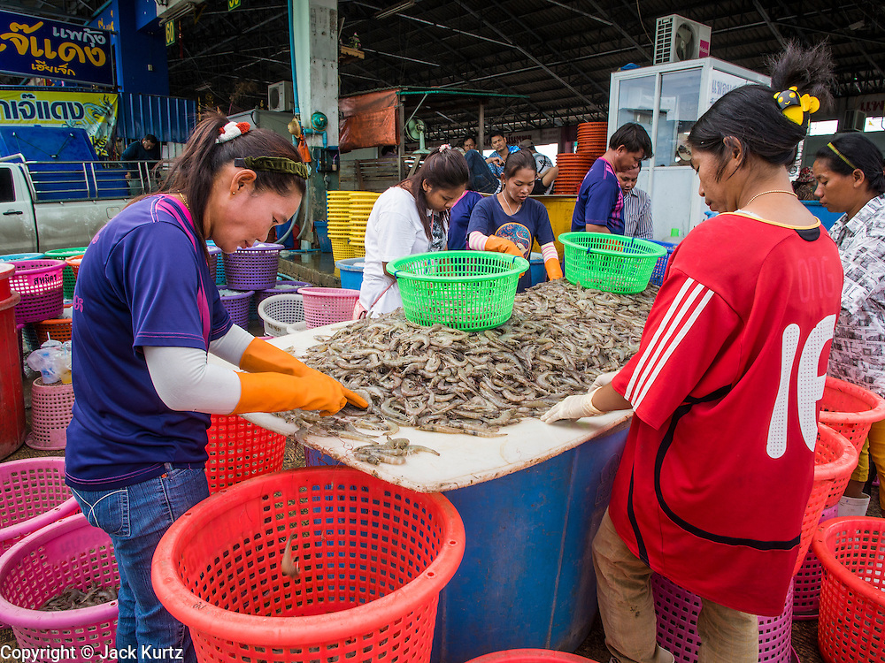 20 JUNE 2014 - SAMUT SAKHON, SAMUT SAKHON, THAILAND: Burmese migrant workers sort farm raised shrimp at a processing center in Samut Sakhon. Hundreds of thousands of migrant workers from Myanmar work in the Thai fishing industry. Samut Sakhon, (sometimes still called Mahachai, its historical name) is a large fishing port. Many Burmese live in the town and work in the fish process plants. Although hundreds of thousands of Cambodians fled Thailand last week after the military coup, the Burmese workers have stayed and are still working in many Thai towns.    PHOTO BY JACK KURTZ