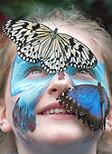 2015_01_16_butterfly_SSI
